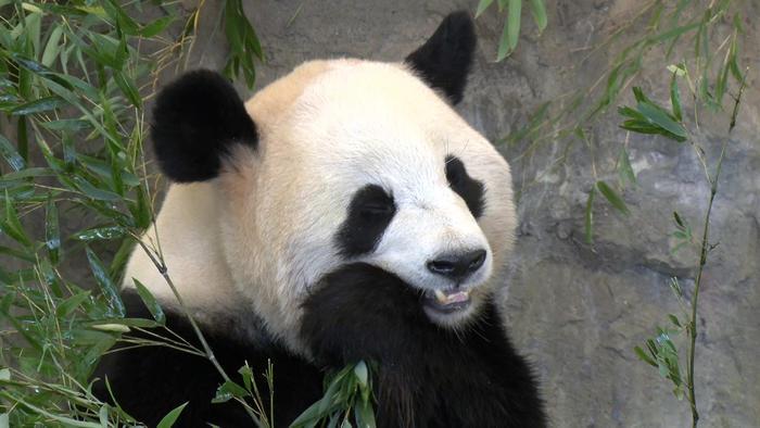 写真:おいでよ和歌山 <br>パンダ!絶景!グルメの旅 白浜~串本篇