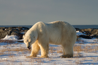 discoverychannel-museum_23_02.jpg