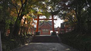goriyakusan_19_2.jpg