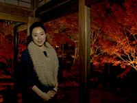 日本ほのぼの散歩 第18回「福岡・博多」