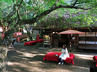 日本ほのぼの散歩2時間スペシャル「世界遺産と国宝に出会う 古都・奈良」