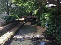 日本ほのぼの散歩 第34回「世界遺産・富士山からの恵みあふれる 水の都・三島」