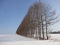 日本ほのぼの散歩 第46回「冬の北海道の大自然を体感 白銀の世界を楽しむ」