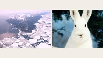 北の自然と野生シリーズ