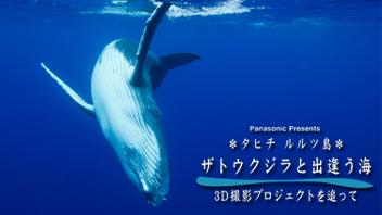 タヒチ・ルルツ島 ザトウクジラと出逢う海 3D撮影プロジェクトを追って
