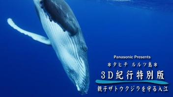 3D紀行年末特別版「タヒチ・ルルツ島 親子ザトウクジラを守る入江」