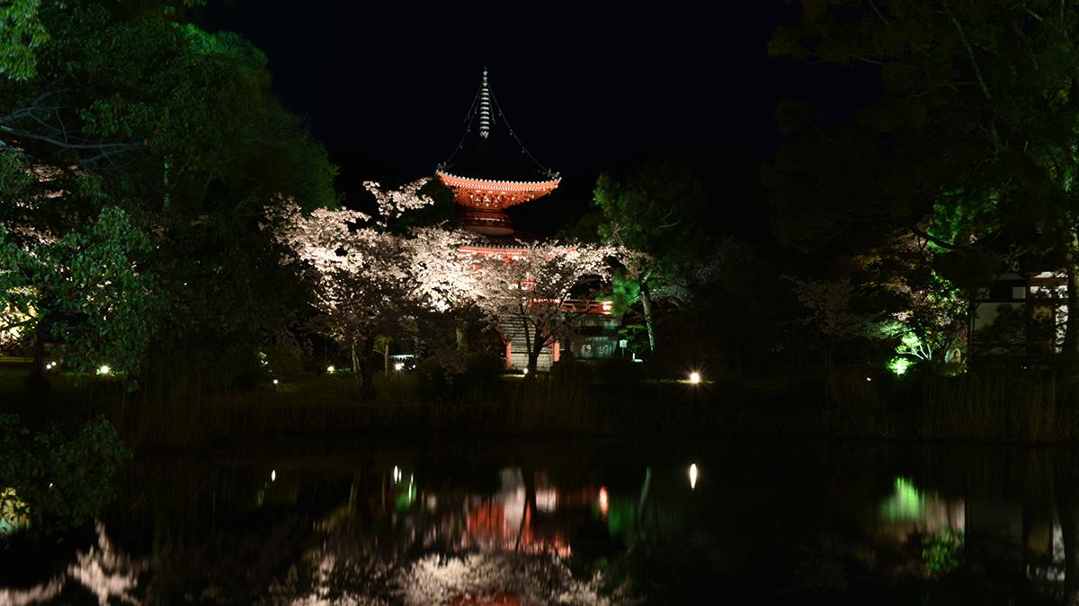 京都夜桜_1