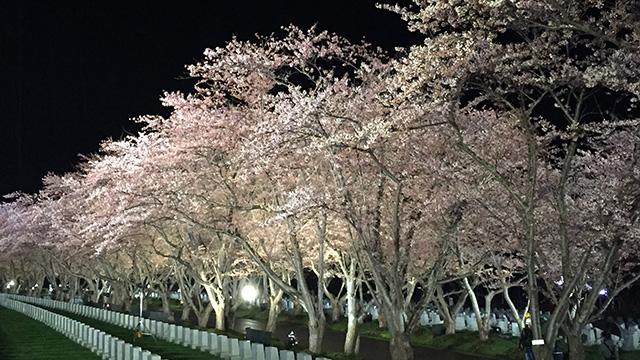 写真:北の大地 さくら物語<br>~春への想いを紡ぐ 塩狩峠・旭山・厚田の桜守~